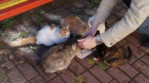 Seiko Solar Diver SNE107 and cats